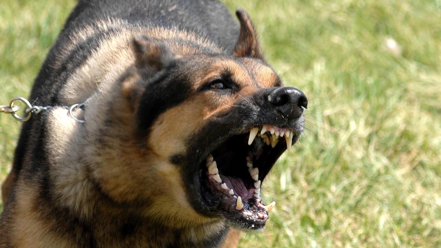 bei-einer-hausdurchsuchung-in-wiesbaden-erschossen-polizeibeamte-einen-hund-symbolbild