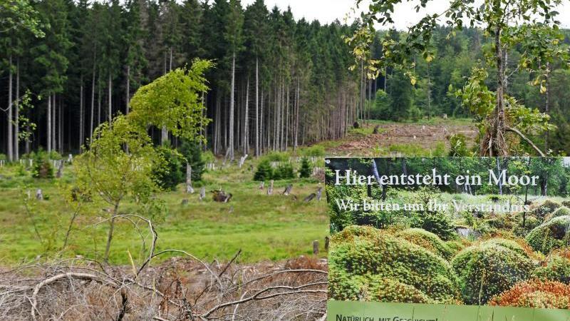 ein-plakat-der-verwaltung-des-nationalparks-hunsruck-hochwald-weist-auf-die-entstehung-eines-moors-hin-foto-picture-alliancepeter-zschunkedpaarchivbild