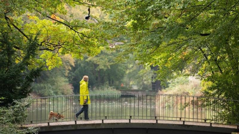 eine-frau-geht-mit-ihrem-hund-in-einem-park-uber-eine-brucke-foto-sebastian-kahnertdpa-zentralbilddpaarchivbild