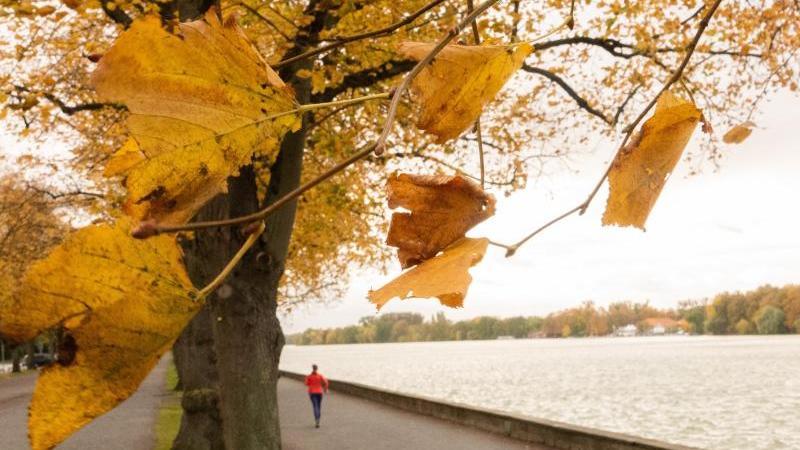 eine-frau-joggt-an-einem-herbsttag-eine-promenade-entlang-foto-demy-beckerdpasymbolbild