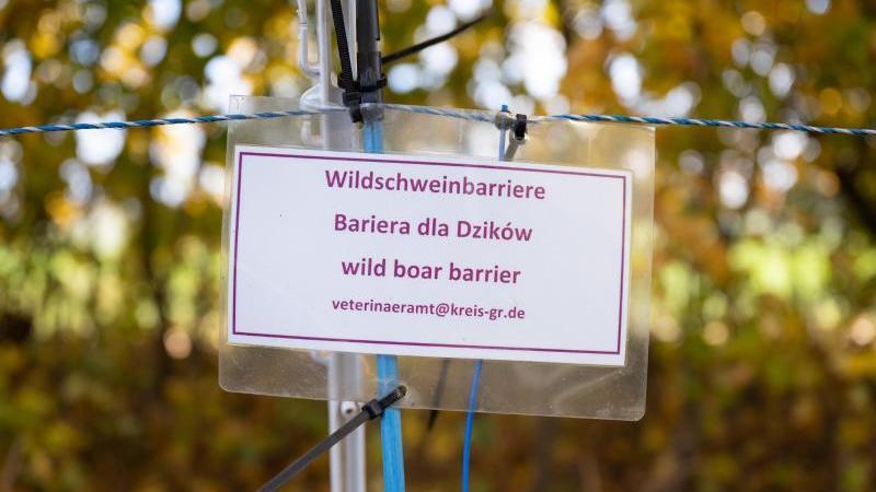 ein-schild-mit-der-aufschrift-wildschweinbarriere-hangt-an-einem-zaun-foto-sebastian-kahnertdpa-zentralbilddpasymbolbild