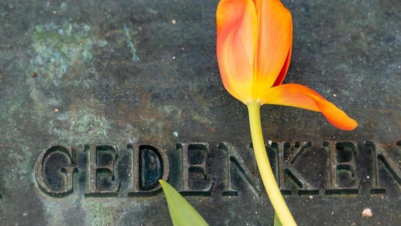 mala-tribich-holocaust-uberlebende-im-kz-bergen-belsen-besichtigt-das-gelande-der-gedenkstatte-foto-moritz-frankenbergdpa