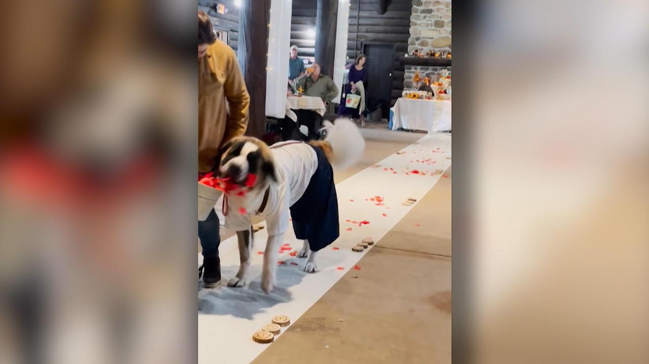 blumenjunge-finnick-bernhardiner-geht-als-blumenhund-viral