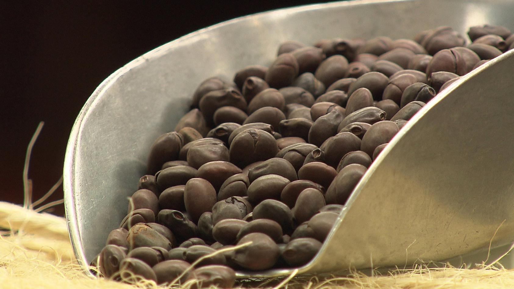 gerostete-lupinen-sehen-fast-so-aus-wie-normale-kaffeebohnen-der-unterschied-bei-lupinen-wird-die-haut-mitgerostet
