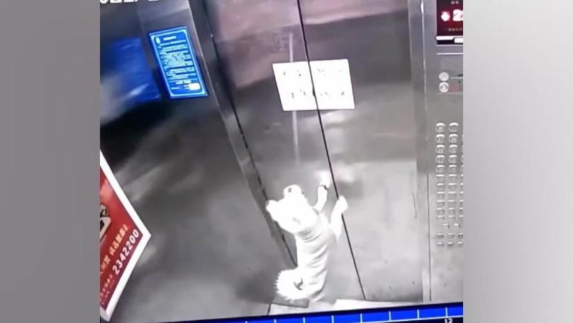 krasses-video-aus-china-lift-fahrt-los-hund-hangt-in-der-luft