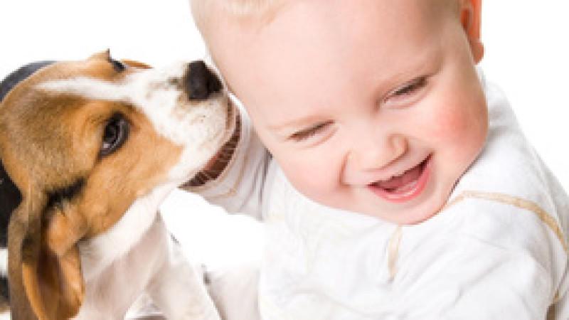 Viele Kinder wünschen sich Tiere als Geschenk