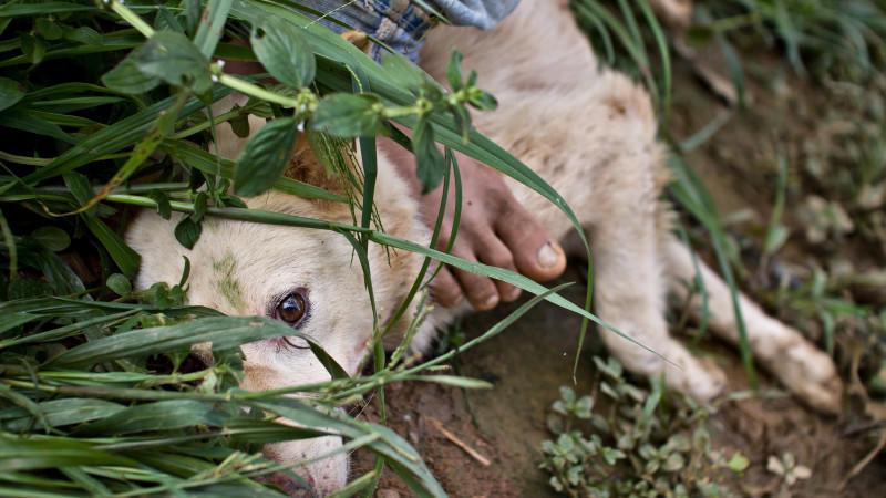 CDU-Politiker fordert härtere Strafen für Tierquäler.