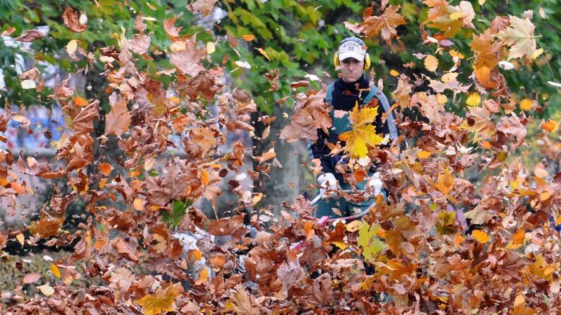 Mann mit Laubsauger bläßt Blätter in die Luft.