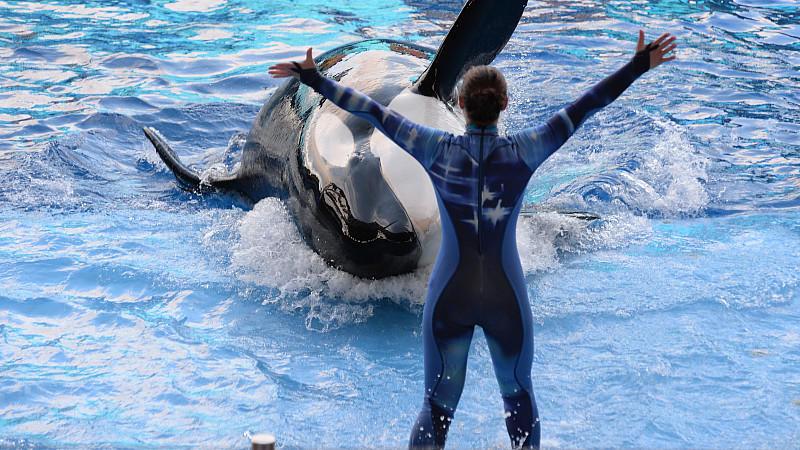 'SeaWorld'-Trainerin mit Orca.