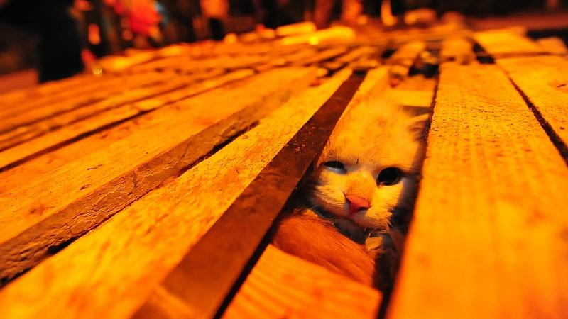 Tierschutz: Katzenfell in deutschen Mützen