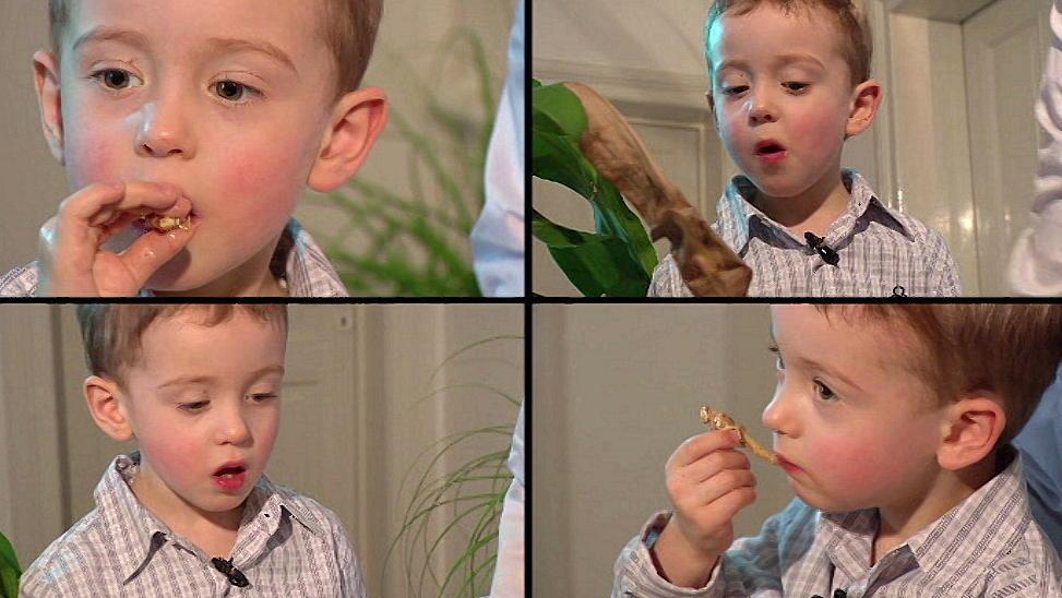 Insekten essen: Tibo (3) liebt Mehlwürmer, Maden & Co.