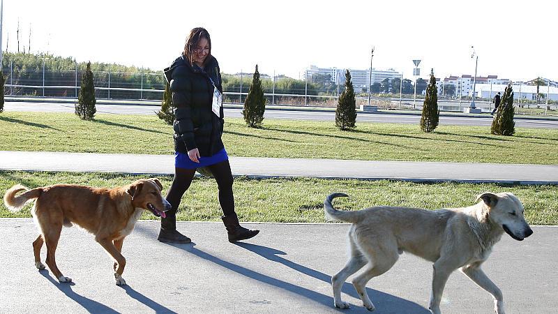 Umweltschützer und Tierfreunde beklagen das rigide Vorgehen der Behörden gegen herrenlose Hunde in der Olympiastadt Sotschi.