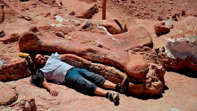 Der Oberschenkelknochen des Titanosauriers ist größer als ein Mitglied des Forscherteams. Foto: Museum of Palaeontology Egidi Feruglio (MEF)