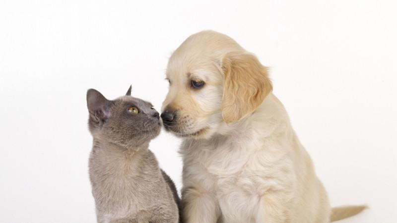 Eine neue US-Studie zeigt: Katzenhalter sind intelligenter als Hundebesitzer. Außerdem sind sie introvertierter und sensibler als Hundefreunde.