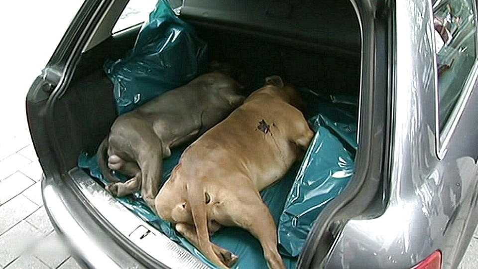 Die erschossenen Kampfhunde hatten zuvor zwei Männer gebissen.