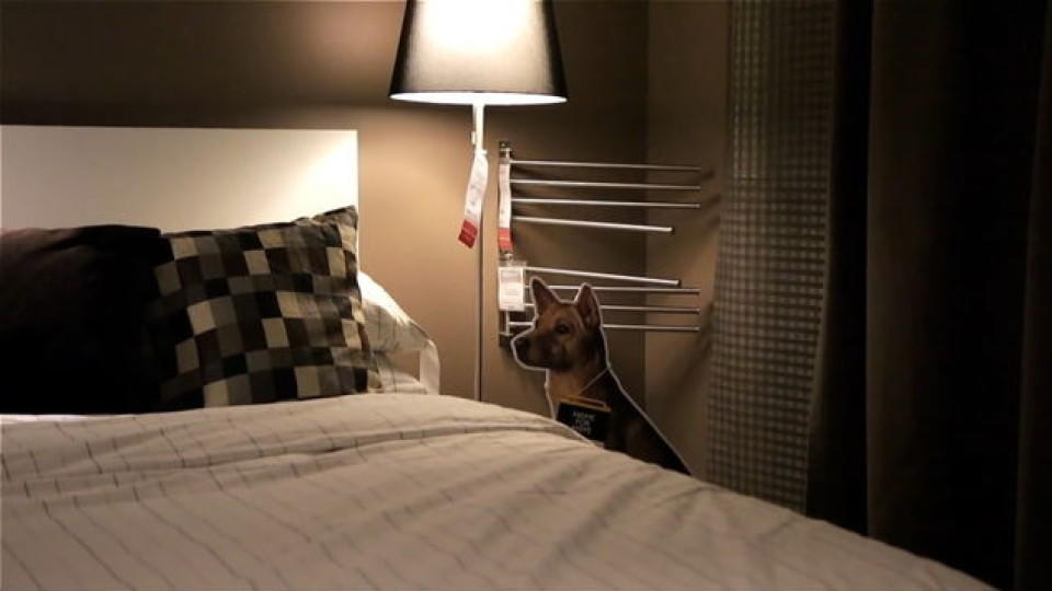 Ikea hilft Straßenhunden in Singapur
