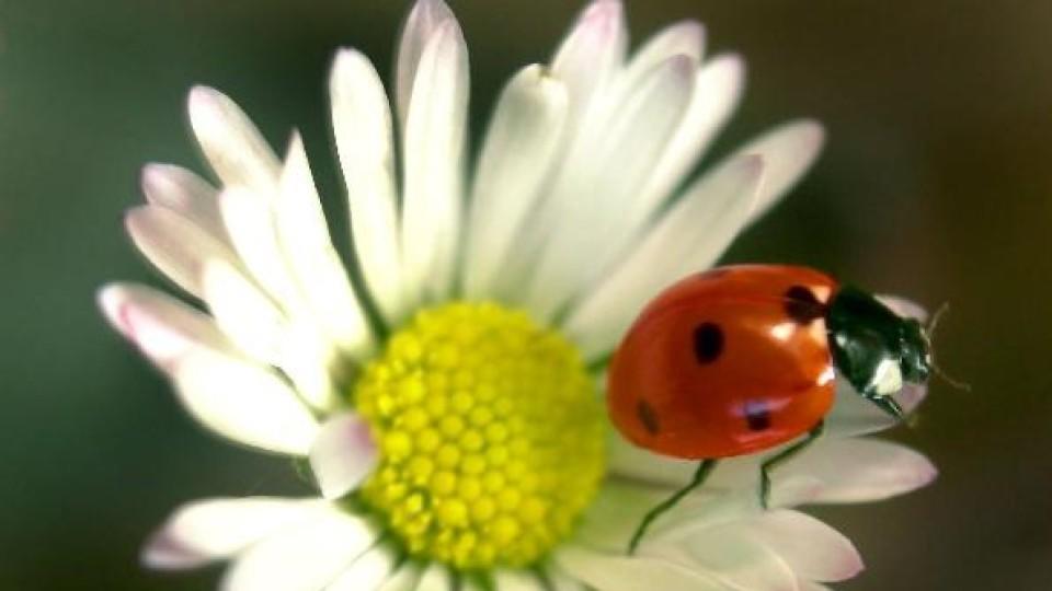Marienkäfer sind nicht so harmlos wie sie aussehen.