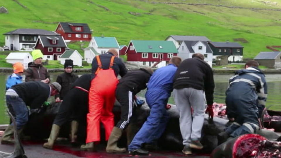 Waljagd auf den Färöer-Inseln