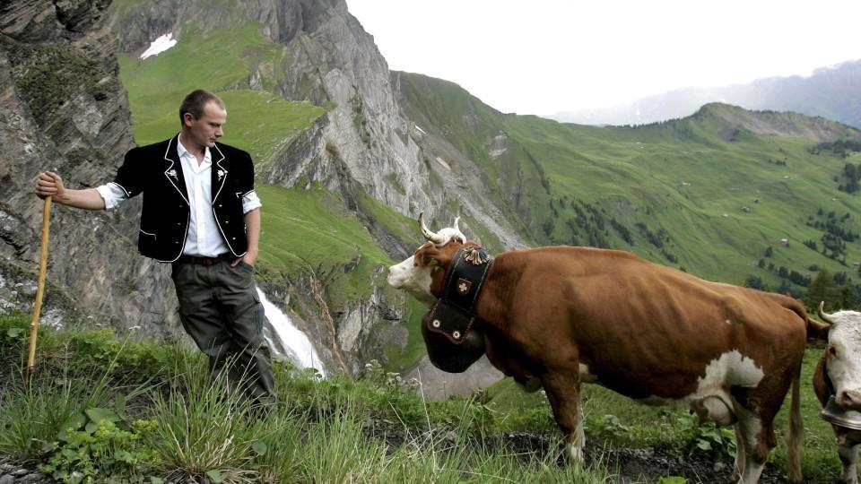 Tierschützerin will Kuhglocken verbieten