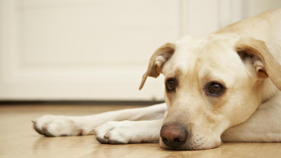 Sind Hunde eifersüchtig, wenn Herrchen einen anderen Hund streichelt?