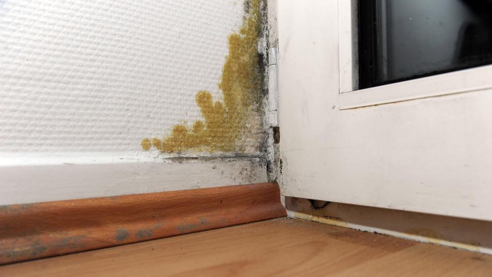 ARCHIV - ILLUSTRATION - Ein Schimmelfleck ist am 19.11.2012 in Hamburg an einer Balkontür zu sehen. Der BGH verhandelt am 17.10.2014 darüber, inwieweit die Miteigentümer eines Hauses die Sanierung einer Wohnung mitfinanzieren müssen. Foto: Daniel Rei