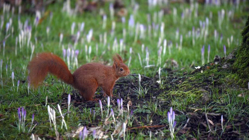 Nicht nur die Eichhörnchen tummeln sich jetzt im Garten - auch wir können einiges tun, damit es im Frühling losgehen kann.