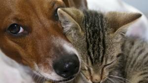 Haustiere: Was kostet ein Tier?
