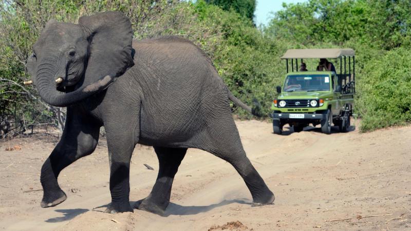 Im beliebten Krüger Nationalpark in Südafrika wurden der Schädel und die Hose eines Wilderers gefunden.