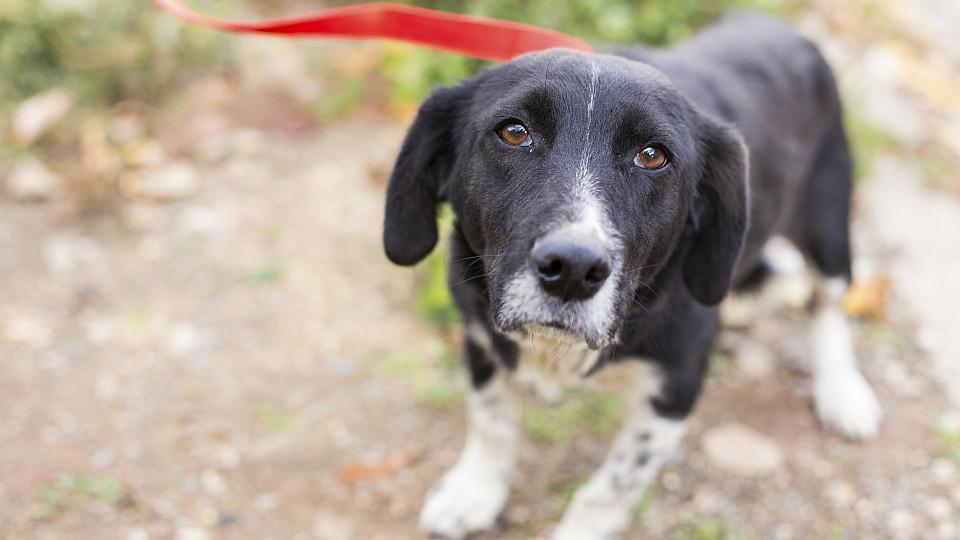 In der Urlaubszeit werden jedes Jahr Tausende Haustiere ausgesetzt. Werden die Besitzer erwischt, drohen ihnen hohe Strafen.