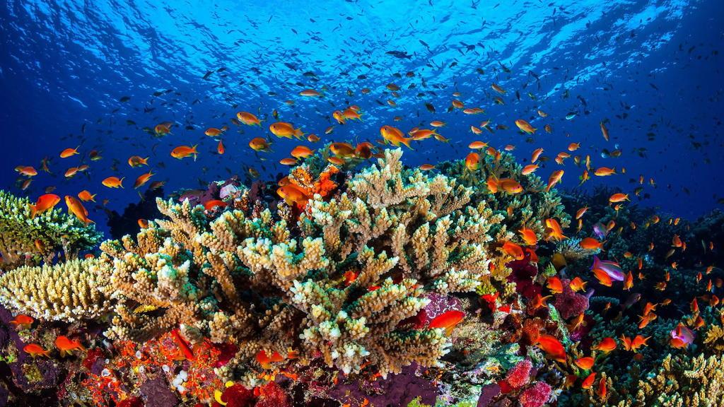 Das Great Barrier Reef gilt schon lange als bedroht - aber jetzt könnte es Hoffnung geben.
