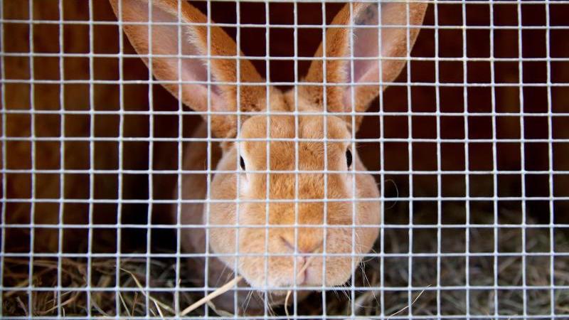 Kaninchen hinter Stallgitter