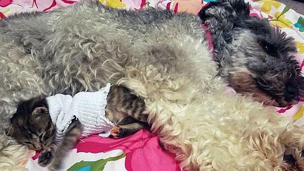 Hündin Amelie und Kätzchen Pipes sind beste Freunde.