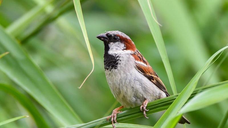 Diese Vögel gibt es in fast jedem Garten