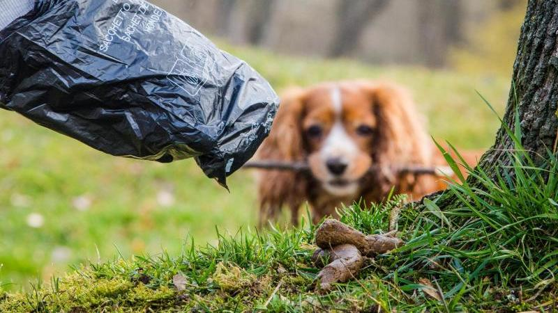 Gibt es Alternativen zum Hundekotbeutel aus Plastik? Foto:Christoph Schmidt/Archiv