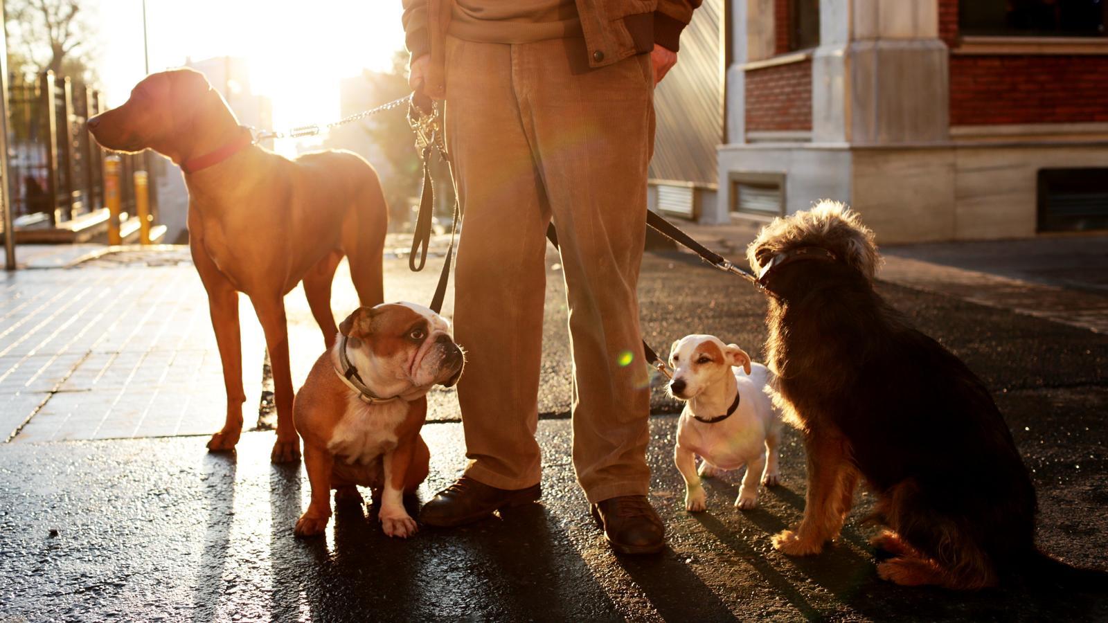 So viele verschiedene Hunderassen - welche sind in Deutschland besonders beliebt?