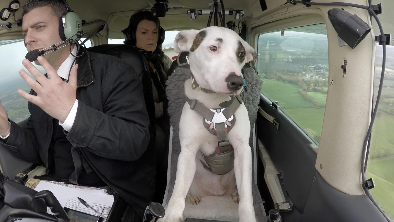funf-monate-training-hunde-die-flugzeuge-fliegen-konnen