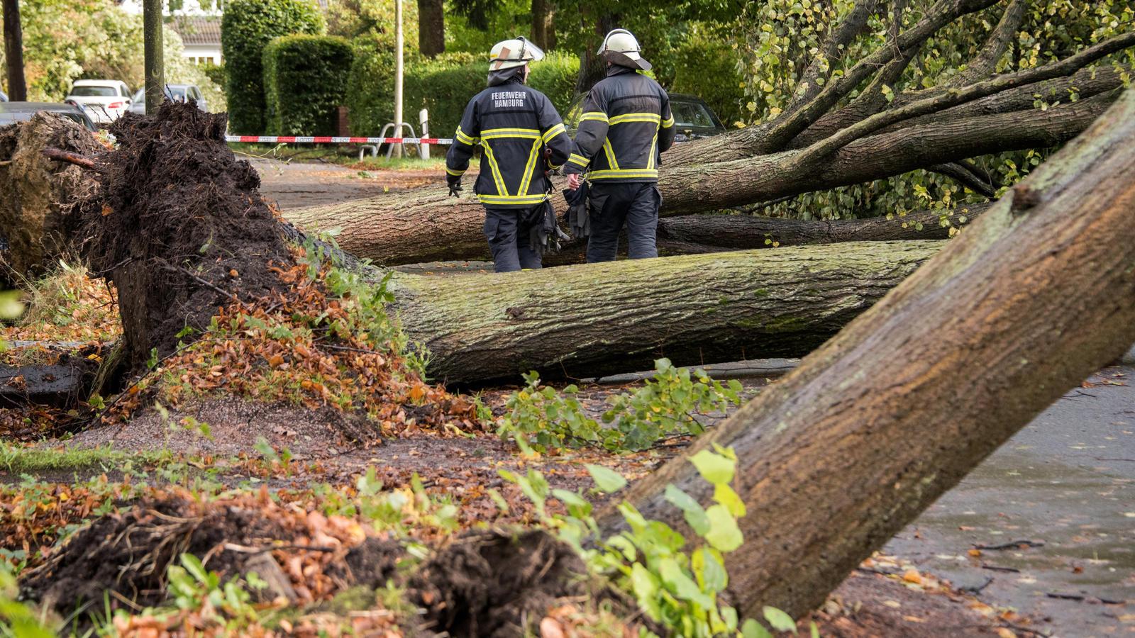 Sturmtief XAVIER hatte im Oktober 2017 u.a. Bäume entwurzelt, wie hier in Hamburg.