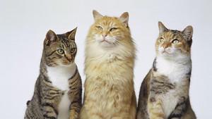 Es gibt viele verschiedene Katzen