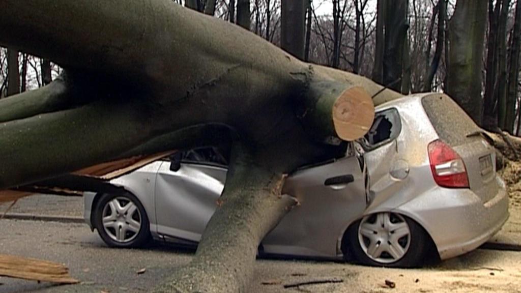 """Ein umgestürzter Baum liegt am Donnerstag (18.01.2007) in Dortmund auf einem unbesetzten Auto. Umgestürzte Bäume, umherfliegende Dachziegel, voll gelaufene Keller und eingestellter Bahnverkehr: Das Orkantief """"Kyrill"""" richtete am Donnerstag zahlreiche"""