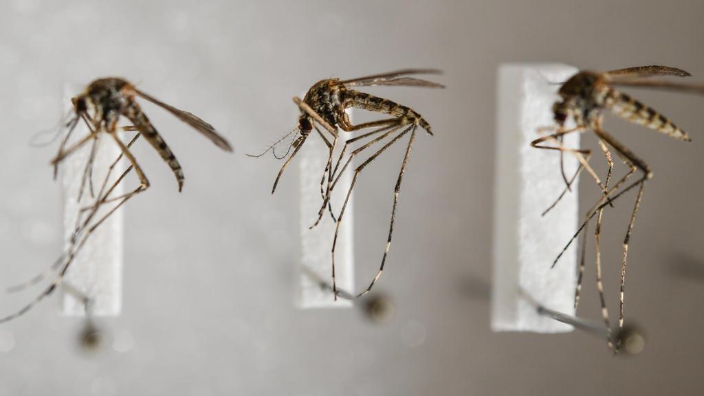 Mücken sind auch im Herbst noch aktiv.