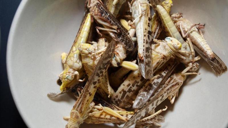 Keine Seltenheit mehr?In Deutschland könnte es schon bald mehr Insekten-Snacks wie diese Heuschrecken geben. Foto: Karin Willen