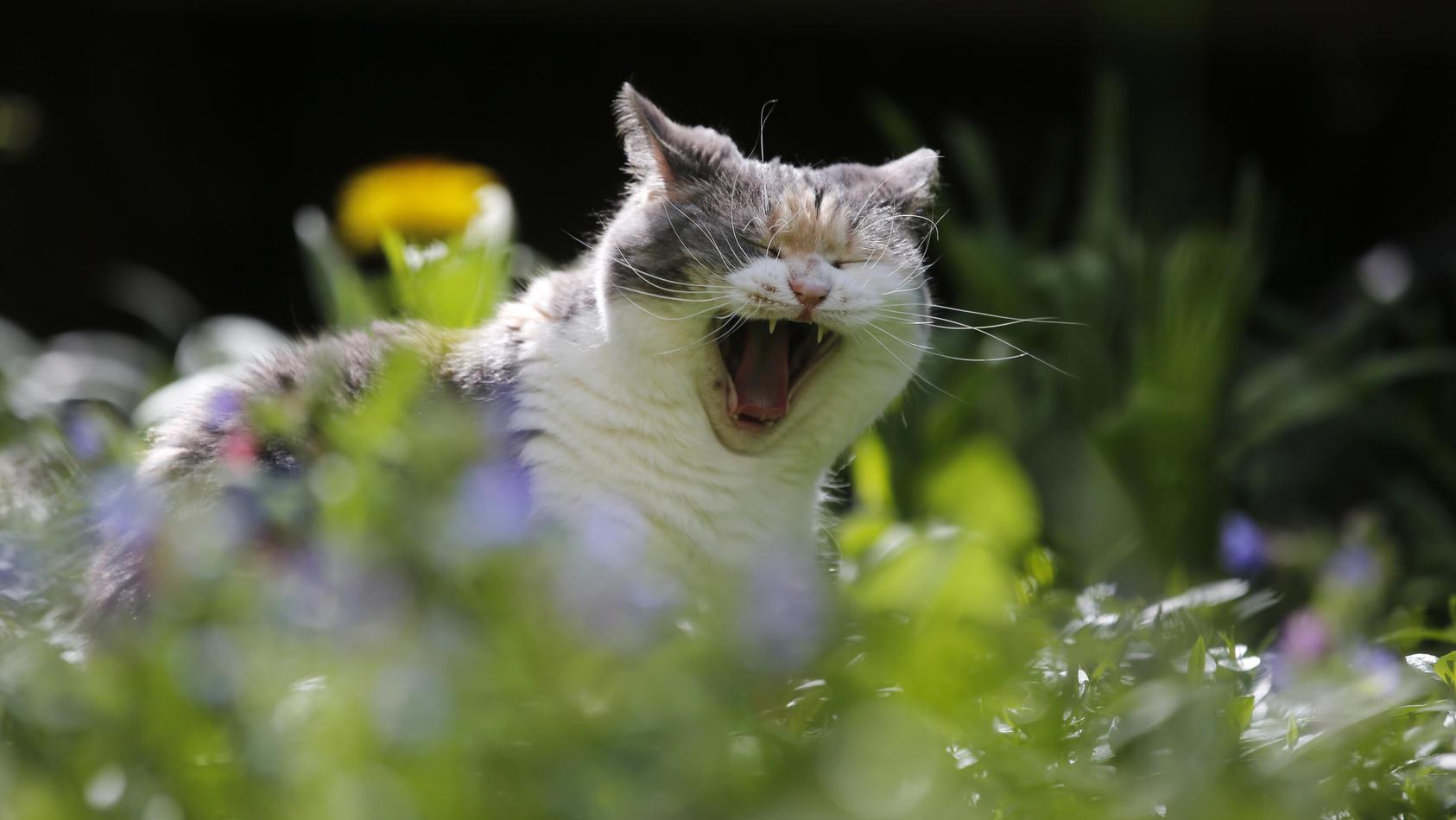 Gericht urteilt: Luftgewehrschüsse auf Katze sind keine Tierquälerei