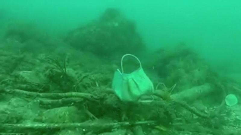 Plankton Meer